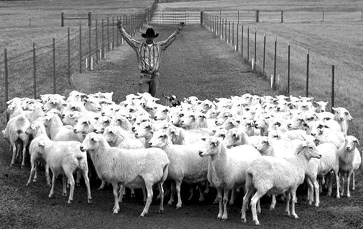 poor_shepherd